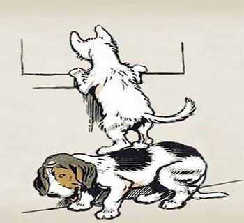 Cuento El Perro Y El Gato